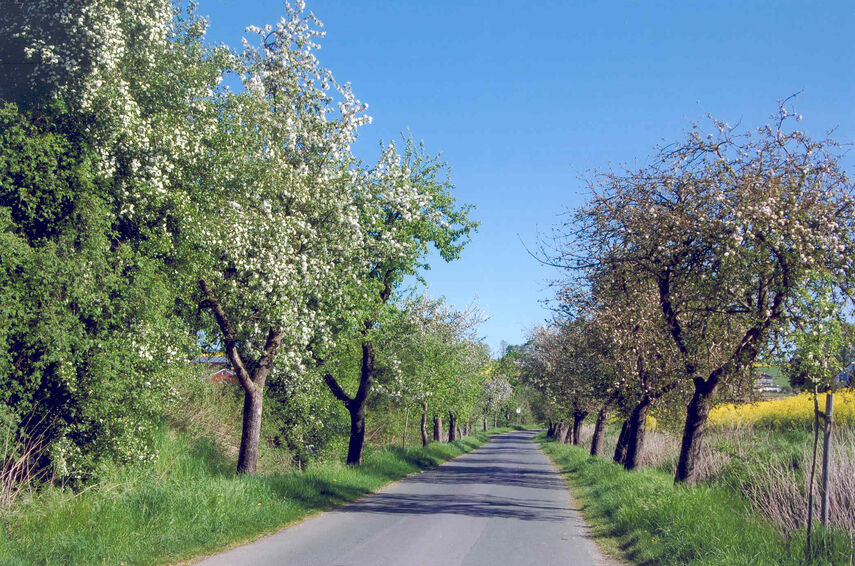 Obstbaum-Allee